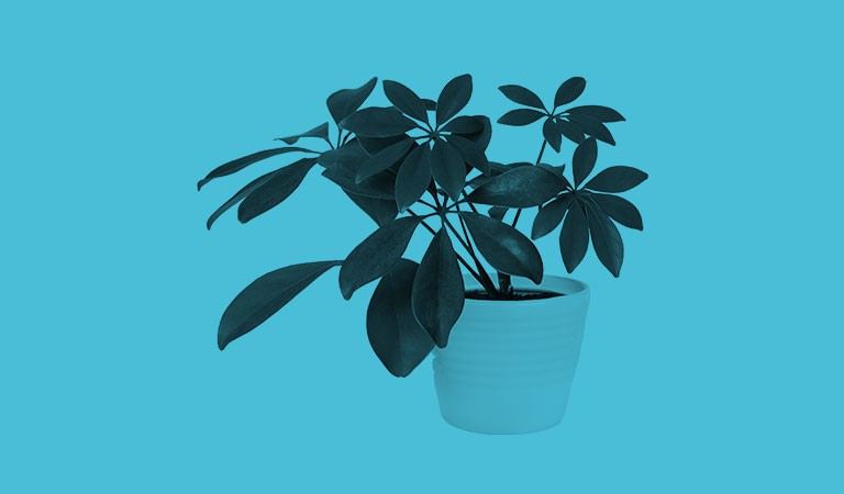 plant-light-blue